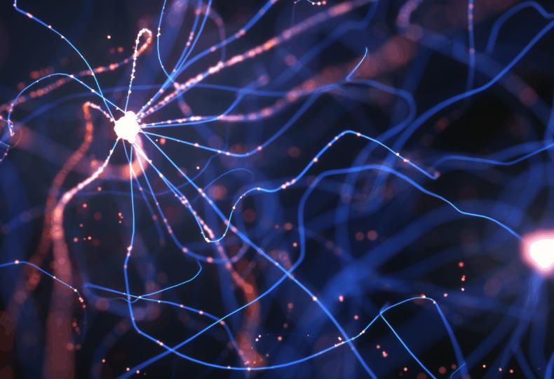 Neural networks, Deep neural networks, Neural network and brain, Neuroscientist, Human brain